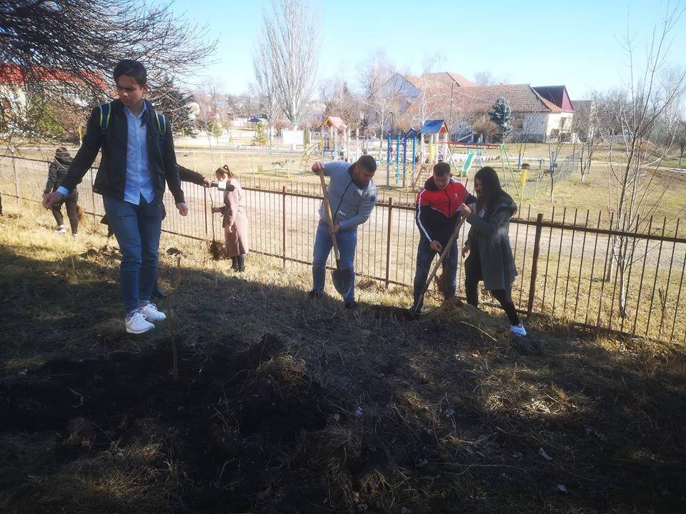 FOTO/ Elevii unui liceu din Mereni au plantat o livadă de aluni – premiu pentru colectarea a două mii de kg de deșeuri electronice