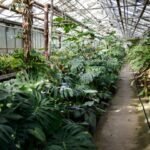 Grădina Botanică din Chișinău și-a deschis ușile pentru vizitatori