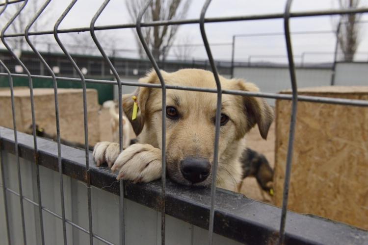 FOTO/ 10 voiliere pentru adăpostirea câinilor maidanezi, deschise la Chișinău. Ce capacitate au