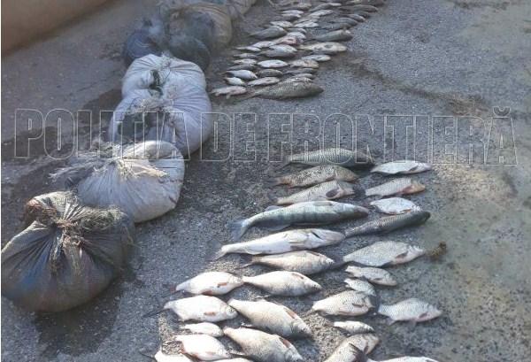 VIDEO/ Braconaj piscicol în rezervația Prutul de Jos. Doi bărbați, prinși cu 15 kg de pește din lacul Beleu