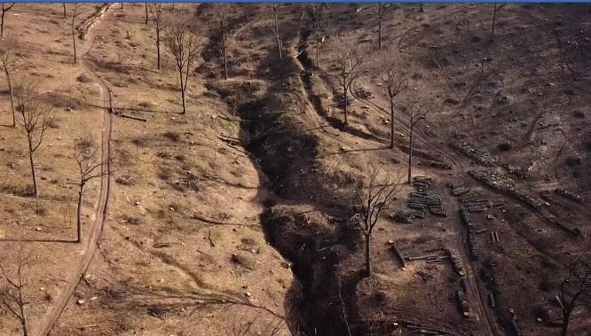VIDEO/ Imagini dezolante în Parcul Național Orhei. Cioturi și câte un copac pe o rază de câțiva metri