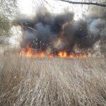 FOTO. VIDEO/ Incendiu în Rezervația naturală Prutul de Jos