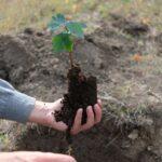 """""""Plantează viață la pahar"""". Follow-the-root lansează un nou proiect de înverzire a Moldovei"""