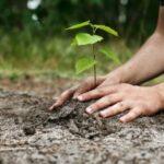 """""""E devreme pentru plantare"""". Ecologiștii susțin că arborii plantați în aceste zile au puține șanse să se prindă"""