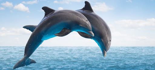INFOGRAFIC/ Numărul speciilor amenințate cu dispariţia este în creștere