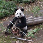 VIDEO/ Animalele de la grădina zoologică din Tokyo pot fi admirate online