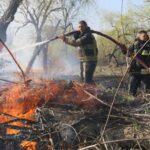 VIDEO/ Chișinău: Incendiu de vegetație în apropierea unei păduri