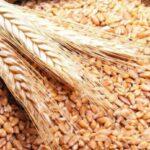 Autoritățile examinează stoparea exportului de cereale