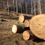 10 milioane hectare de pădure dispar anual. Acum cinci ani se tăia și mai mult