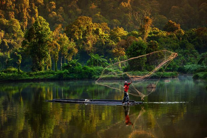 Raport ONU: Suprafața pădurilor într-o continuă scădere, iar pentru protejarea biodiversității lor este necesară o acțiune urgentă