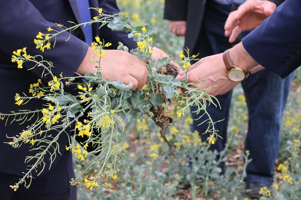 O treime din suprafețele agricole din raioanele Florești și Șoldănești sunt afectate de secetă