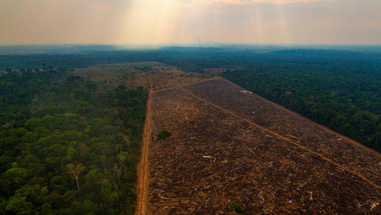 Defrișările din pădurea amazoniană au atins un nou nivel record, pe timp de pandemie
