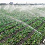 Va fi elaborat un program național de irigare. În comisie – un adept al folosirii apei din subteran