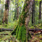 Ministrul Mediului: Pădurile seculare din România ies din circuitul economic și intră sub protecție