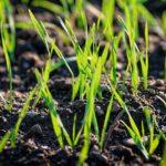 În stratul arabil umiditatea solului a ajuns la norma necesară pentru această perioadă