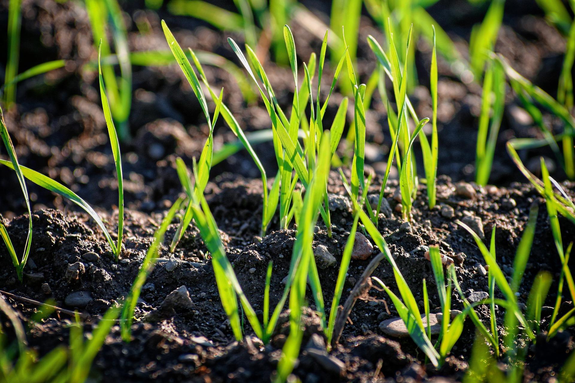 Granturi de până la 50 000 de dolari pentru susținerea producătorilor și procesatorilor agricoli