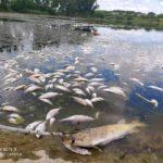 FOTO/ Dezastru ecologic pe râul Cubolta: Sute de pești au murit