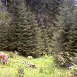 VIDEO/ Imagini inedite cu un tânăr cerb care se hrăneşte, surprinse într-un parc din România