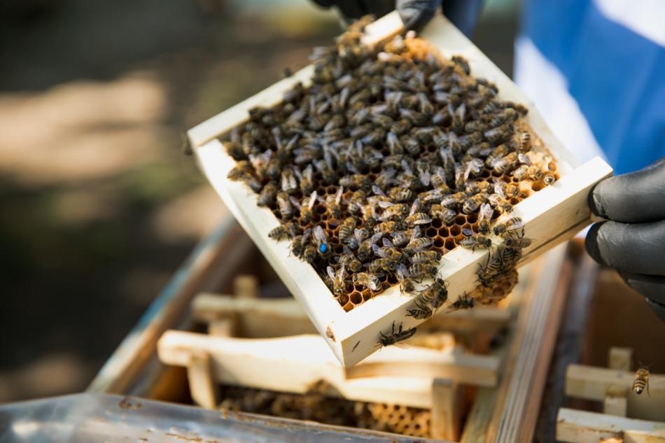 Primul laborator pentru însămânțarea artificială a reginelor de albine și-a început activitatea
