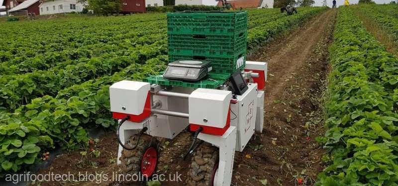 Fermierii britanici testează roboţi care să culeagă fructe din cauza lipsei de mână de lucru