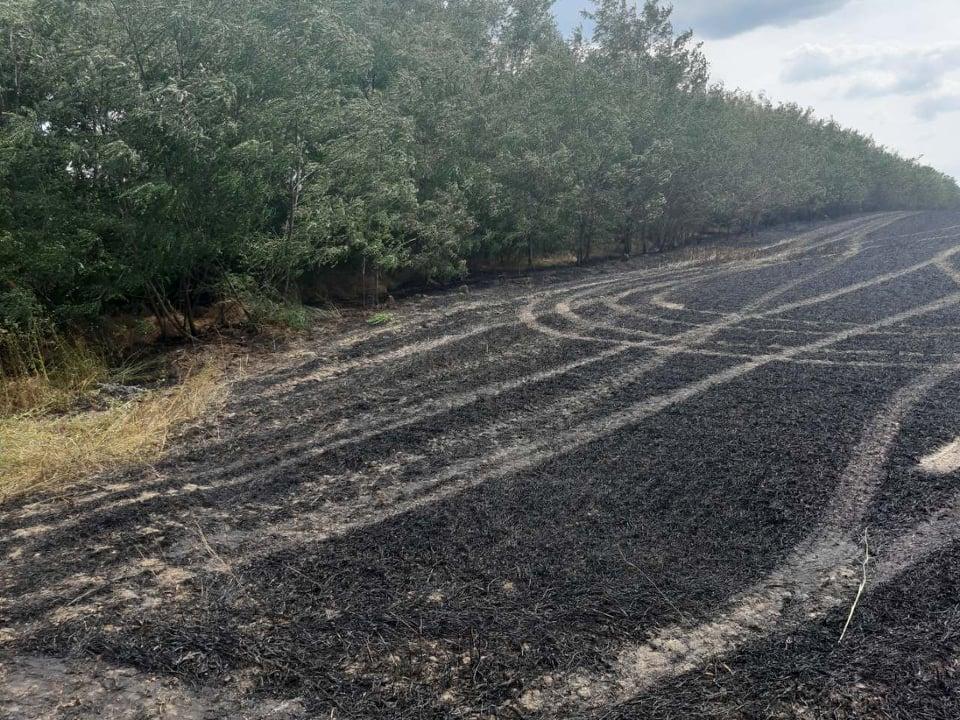 FOTO/ Șapte hectare de grâu, nimicite de foc