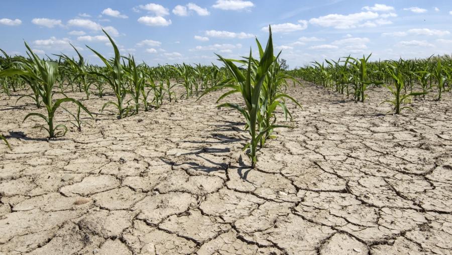Guvernul va aloca circa 300 de milioane de lei pentru a acoperi parțial pagubele din sectorul agricol