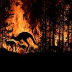 Aproape 3 miliarde de animale au murit sau au fost rănite în incendiile de vegetație din Australia