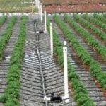 DOC/ Peste 70 de ONG-uri cer moratoriu asupra chestiunii irigării cu apă din subteran