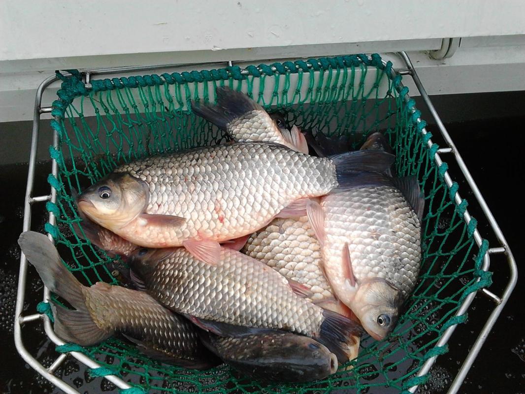 Proveniența peștelui pentru comerț ar putea fi verificată de Inspectoratul pentru Protecția Mediului
