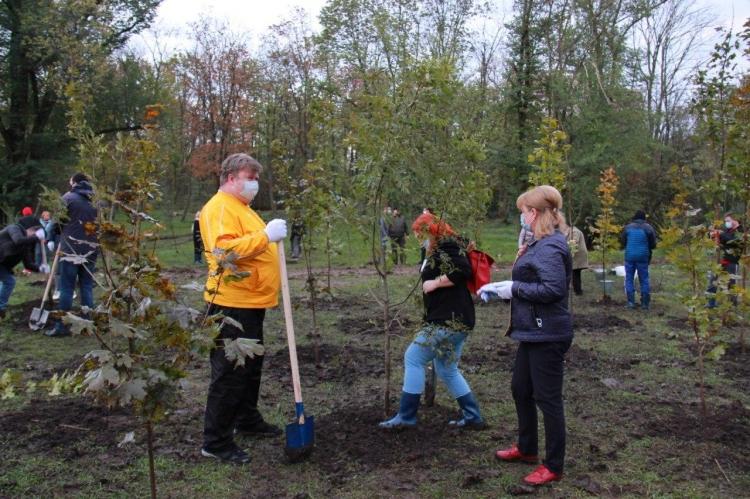 Deși ecologiștii au atenționat că e devreme pentru plantat, primăria anunță că a sădit 2000 de arbori