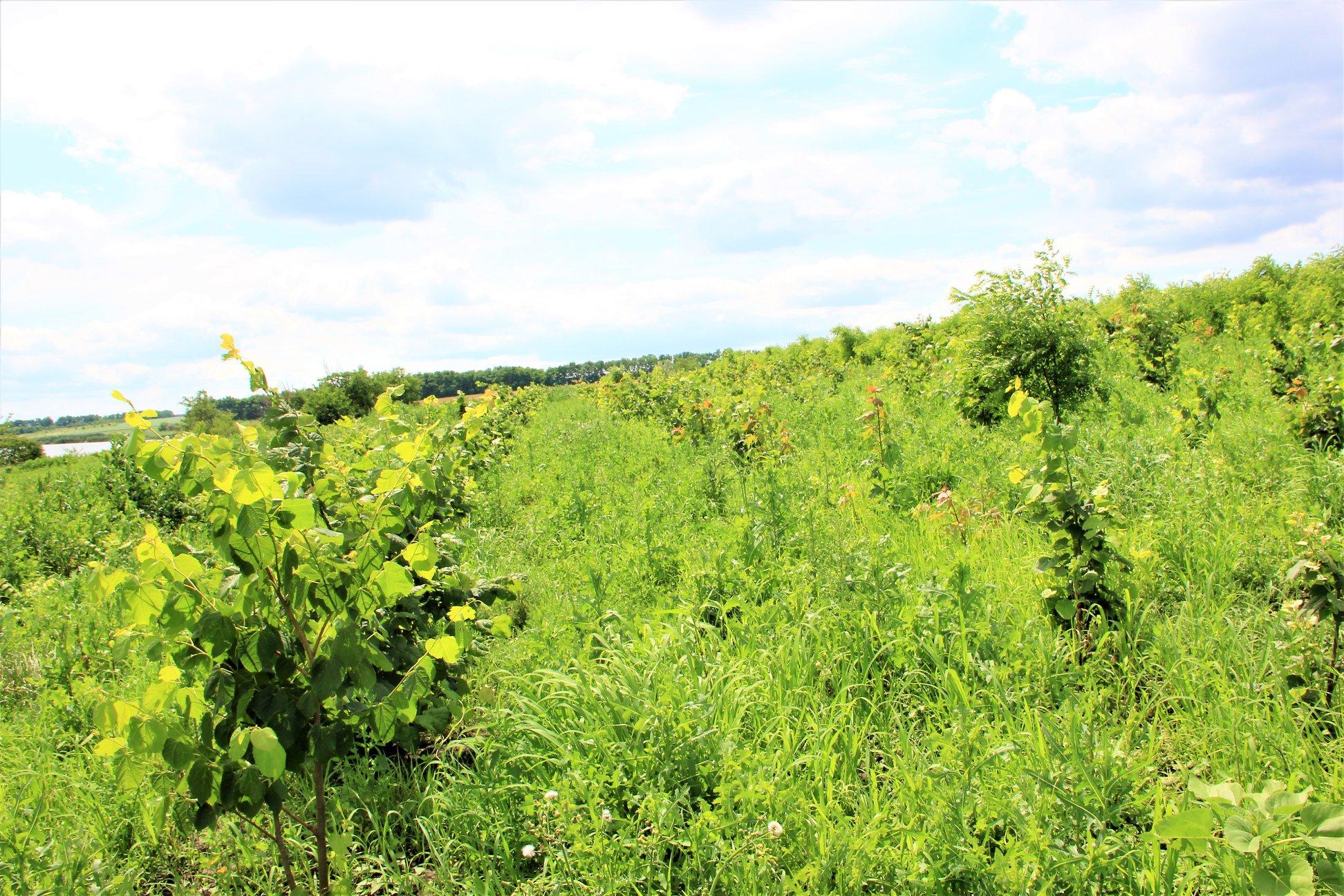 Un viitor coridor ecologic: 9 hectare de fâşie riverană pe râul Glodeanca