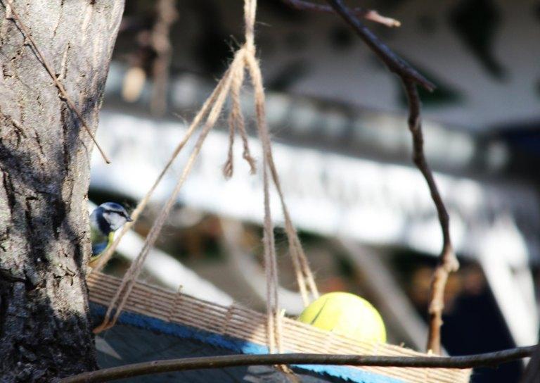 Fotografiază păsări la hrănitoare și câștigă premii. Condițiile de participare