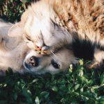 Petiție: Peste 400 de oameni cer anularea deciziei consilierilor dintr-un sat din Hîncești care au decis că pisicile și câinii fără adăpost să fie împușcați