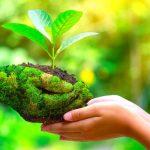 Șapte idei. Cum putem, zilnic, să contribuim pentru un mediu mai curat