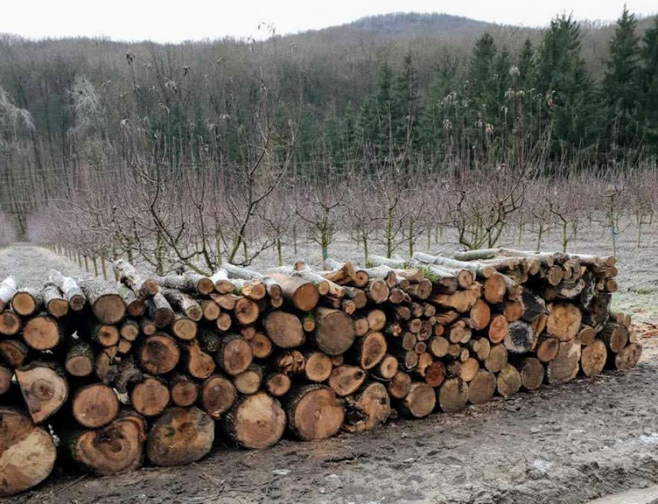 Anchetă de serviciu la Plaiul Fagului, după ce mai multe stocuri de lemn au fost depistate în rezervație