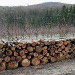 """Ministerul Mediului anunță că va crea o comisie care să examineze circumstanțele tăierii de copaci în rezervația """"Plaiul Fagului"""""""