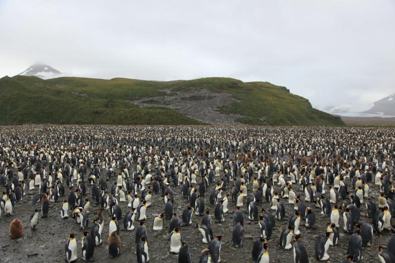 """FOTO/ Un fotograf a surprins un pinguin galben care """"nu a fost văzut până acum"""""""