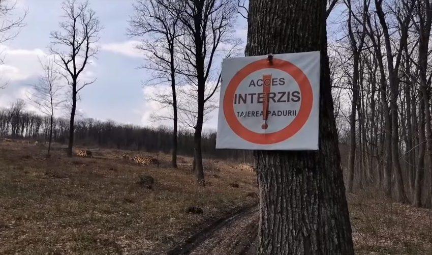 Moldsilva a interzis să se filmeze tăierea copacilor din păduri în absența silvicultorilor. Explicațiile agenției