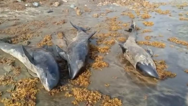 Imagini dezolante pe plajele din Ghana. Cel puţin 80 de delfini, găsiţi morţi