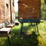 În Moldova, va fi lansată o aplicație care va proteja albinele de otrăviri cu produse de uz fitosanitar