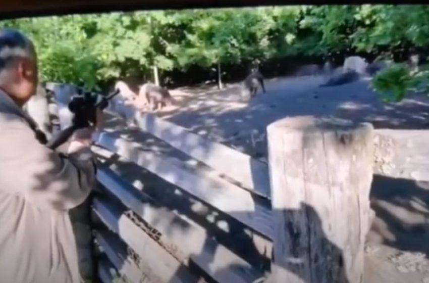 VIDEO: Gestul revoltător al lui Dodon împușcând mistreți în captivitate a provocat reacții dure ale internauților și un flashmob stradal