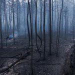 Unul din autorii incendiilor forestiere din Iacutia a fost găsit