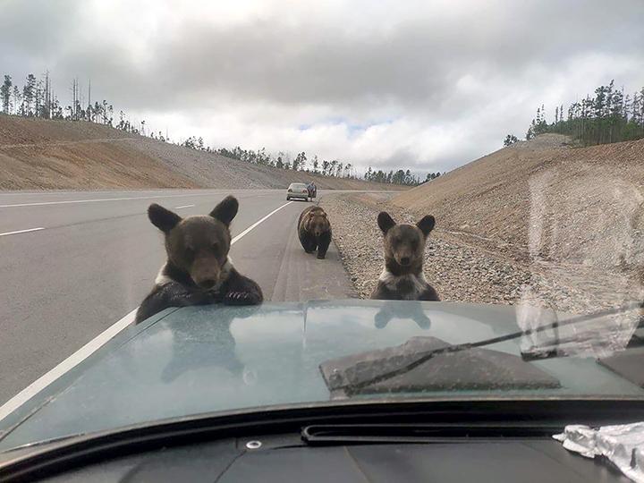 st-bears