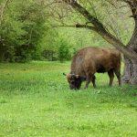 Anunțul făcut de administrația rezervației Pădurea Domnească în contextul stării de urgență în sănătate publică