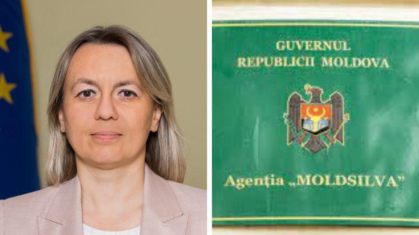 """""""Mafia pădurilor se opune"""". Ministra Mediului anunță că Agenția Moldsilva  va fi reorganizată"""