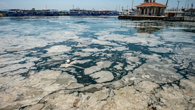 """""""Mucilagiul marin"""" riscă să ajungă în Marea Neagră, după ce în Marea Marmara a redus drastic diversitatea peștilor"""