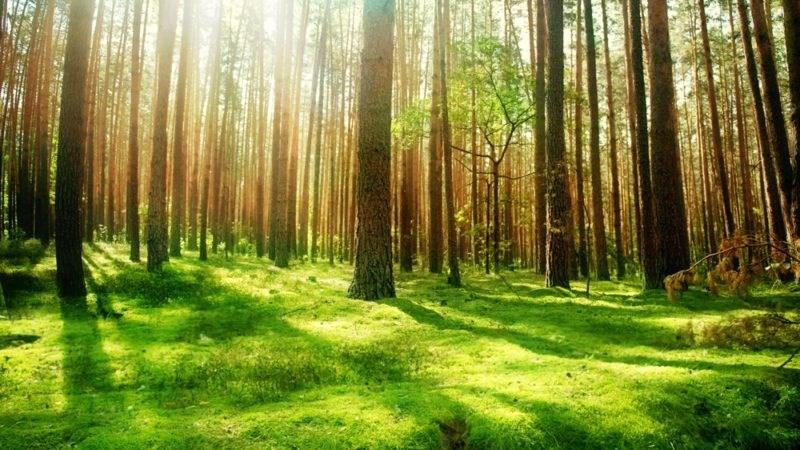 Bani pentru a planta o pădure. Cadoul inedit primit de un cuplu la nuntă