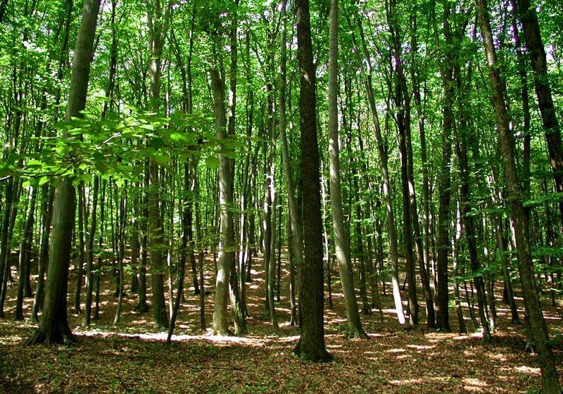 """VOX/ """"Sunt bogăția țării"""". Ce cred oamenii despre importanța pădurilor"""