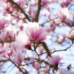 Studiu: Peste 30% dintre speciile de abori ar putea dispărea, lista include arțarul, abanosul sau magnolia