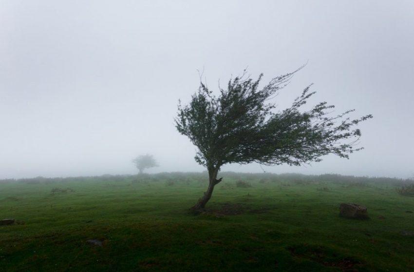 Avertizare METEO: Cod galben de vânt în toată țara